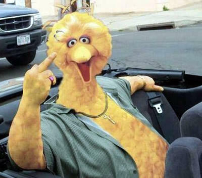 big bird loves ya