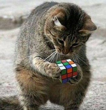 rubiks cat
