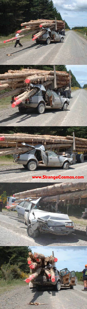 logging accident
