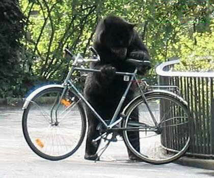 I´d love to have my bike back, Mr. Pooh..