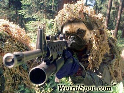 Armed Attack Dog