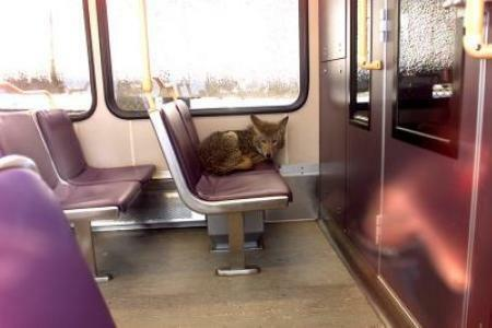 You never know who you'll see on the subway.