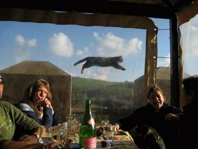 holy shit its a flying cat!