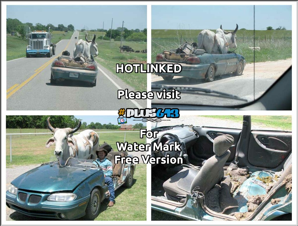 Oklahoma Cattle Transport