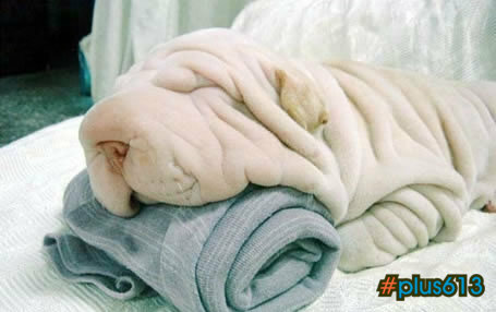 Part dog Part towel...