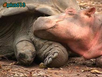 hippo and tortoise e-mail